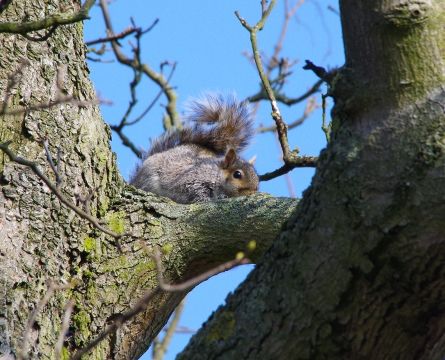 Squirrel sits perfectly still.
