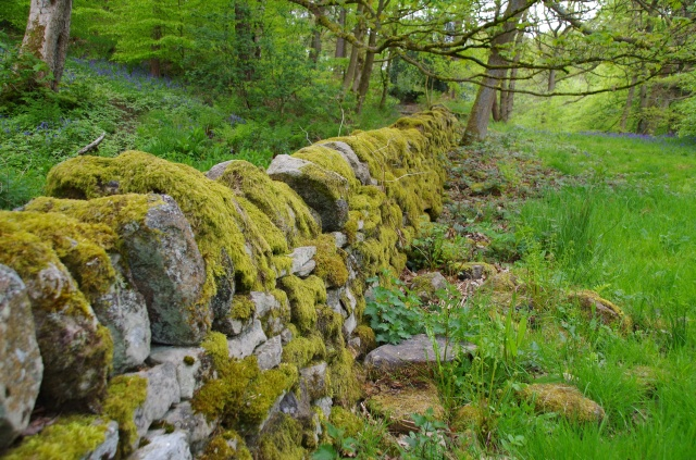 Lichen on dry stone wall