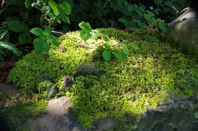 Lichen on dry stone wall