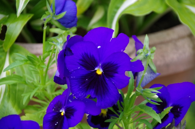 Stunning colour............